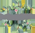 Fynbos Florals
